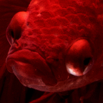 Your Website Is A Drowning Fish Without Your Content